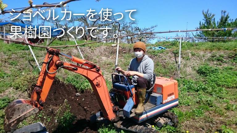ショベルカーを使って 果樹園づくりです。