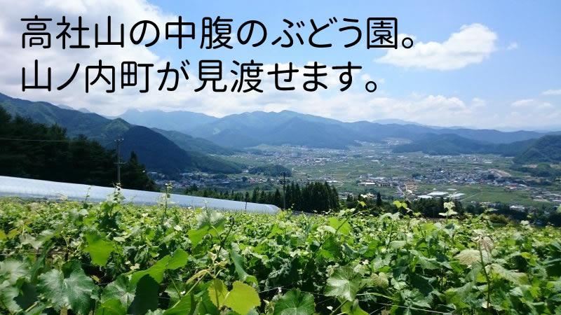 高社山の中腹のぶどう園。 山ノ内町が見渡せます。