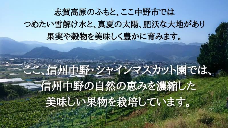 志賀高原のふもと、ここ中野市では つめたい雪解け水と、真夏の太陽、肥沃な大地があり 果実や穀物を美味しく豊かに育みます。ここ、信州中野・シャインマスカット園では、 信州中野の自然の恵みを濃縮した 美味しい果物を栽培しています。