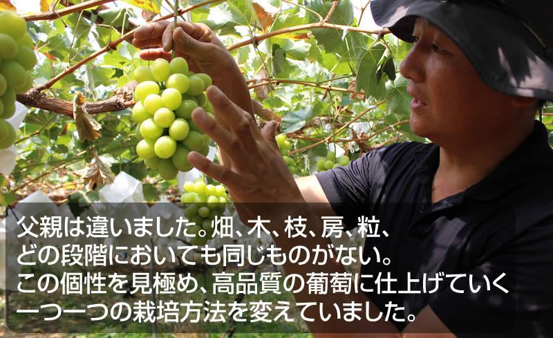 父親は違いました。畑、木、枝、房、粒、 どの段階においても同じものがない。 この個性を見極め、高品質の葡萄に仕上げていく 一つ一つの栽培方法を変えていました。